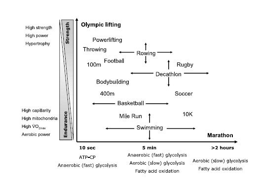 Obviously Not All Of These Capacities Are Necessary For Sports But Most Will Require Some Levels Many Them