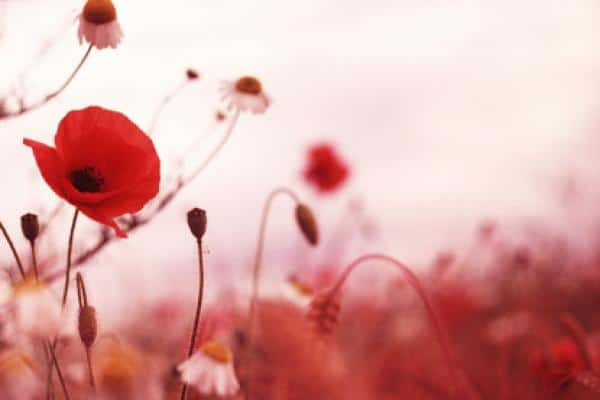 remembrance-veterans-day